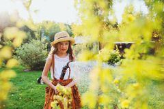 Happy child girl watering flowers with hose in summer garden. Holding water sprinkler, playing outdoor royalty free stock images