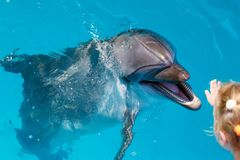 Happy child hand touch a dolphin. Marine life royalty free stock image