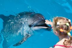 Happy child hand touch a dolphin. Marine life stock images