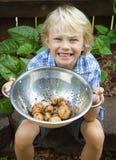 Happy child holding bowl of organic potatoes. Happy young boy holding organic potatoes from his garden Stock Photo