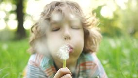 A happy child lies on a summer meadow with a flower in his hand. A curly-haired boy blowing on a dandelion. Children Day. Happy summer vacation stock video footage