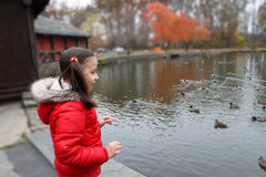 Happy child looking at the ducks. Royalty Free Stock Images