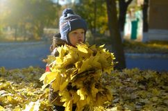 A happy child outdoors has collected a bouquet of autumn yellow leaves stock images