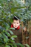Happy child peeking through a gap in the tree.  Royalty Free Stock Photo