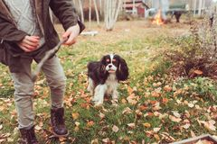 Happy child playing with dog in autumn. Seasonal outdoor activities with kids. Stock Photo