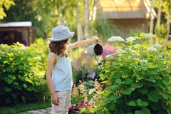 Happy child playing little gardener and watering hydrangea bush in sunny summer garden. Little helper concept. Kids spending summer vacation in countryside Stock Photos