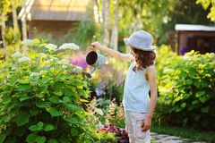 happy child playing little gardener and watering hydrangea bush in sunny summer garden, little helper concept royalty free stock photos