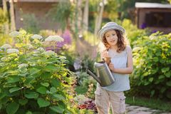 Happy child playing little gardener and watering hydrangea bush in sunny summer garden. Little helper concept. Kids spending summer vacation in countryside Royalty Free Stock Photos