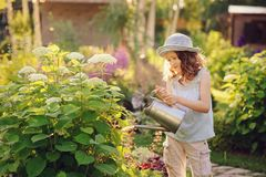 Happy child playing little gardener and watering hydrangea bush in sunny summer garden. Little helper concept. Kids spending summer vacation in countryside Royalty Free Stock Images
