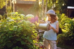 Happy child playing little gardener and watering hydrangea bush in sunny summer garden. Little helper concept. Kids spending summer vacation in countryside stock images