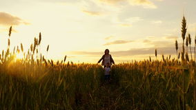 Happy child running with his mother in a field of golden wheat playing in nature stock video footage