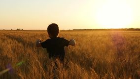 Happy child running on a wheat field at sunset. A little boy playing in a wheat field. Inspire people.