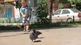 Happy child runs after birds, pigeons fly in the background running to him a little boy into the air. Concept of a happy. Family. Childhood dream stock video footage