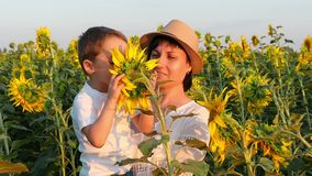 A happy child sits on his mother`s hands and sniffs a sunflower flower. Family in a field of sunflowers at sunset. Slow motion stock video footage