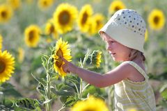 Happy child in sunflower field Stock Photos