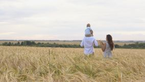 Happy childhood, family walking on the wheat field stock video