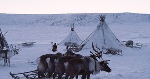 Happy childhood in the middle of Arctic in yurts camp children playing beside the yurts and reindeers. 4k. Happy childhood in the middle of Arctic in yurts camp stock video footage