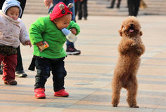 Happy Chinese children with puppy dog stock photo