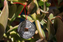 Happy Chinese Coin Shadow. Happy chinese coin hanging on a Money Tree as a symbol of wealth growth Stock Images