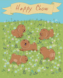 Happy Chow-chow on the blossoming field Royalty Free Stock Photography