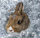 Happy christmas with a cute little rabbit Stock Images