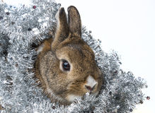 Happy christmas with a little rabbit Royalty Free Stock Photography