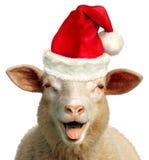 The happy christmas sheep stock photography