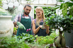 Happy colleagues working at greenhouse. Happy young colleagues working at greenhouse Royalty Free Stock Photo