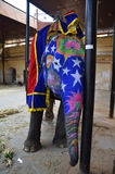 Happy colorful painted elephant in India. Happy colorful elephant in India, the elephant was prepared for annual elephant's parade in jaipur Royalty Free Stock Photo