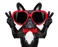 Happy cool dog Royalty Free Stock Photos