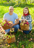 Happy couple with apples harvest Royalty Free Stock Images