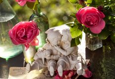 Happy couple on the background of garden roses Royalty Free Stock Images