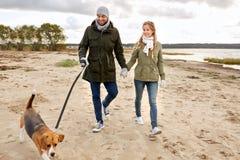 Happy couple with beagle dog on autumn beach stock image