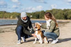 Happy couple with beagle dog on autumn beach. Pet, domestic animal and people concept - happy couple with beagle dog on autumn beach stock photos