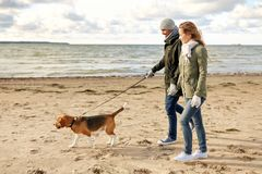 Happy couple with beagle dog on autumn beach. Pet, domestic animal and people concept - happy couple walking with beagle dog on leash along autumn beach royalty free stock photos