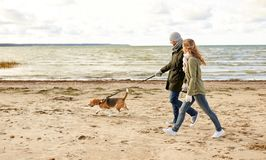 Happy couple with beagle dog on autumn beach. Pet, domestic animal and people concept - happy couple walking with beagle dog on leash along autumn beach stock image