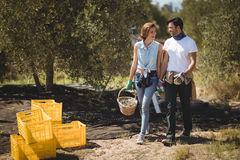 Happy couple carrying olives in basket at farm on sunny day. Full length of happy couple carrying olives in basket at farm on sunny day Stock Photos
