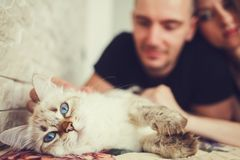 Happy couple with cat. At home. Focus on kitty Stock Photo