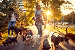 Happy couple dog walker with dogs enjoying in walk. Outdoors stock images