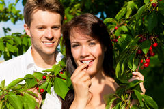 Happy couple eating cherries in summer Royalty Free Stock Image