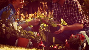Happy couple gardening in the park stock video footage