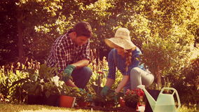 Happy couple gardening in the park stock footage