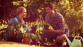 Happy couple gardening in the park stock video