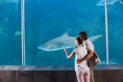 Happy couple looking at shark Stock Photography