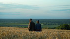 Happy couple, middle-aged man and woman talking and smiling while walking on wheat field at sunset summer evening. stock video footage
