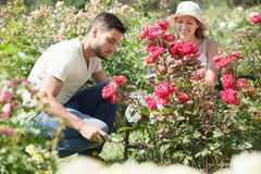 Happy couple planting flowers at the  garden. And smiling at summer resident Royalty Free Stock Photos