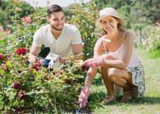 Happy couple planting plants Stock Photo