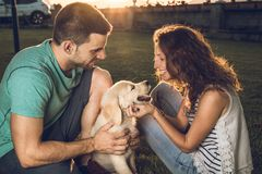 Happy couple with puppy dog in the country. Puppy breed Golden Retriever.Couple in a sunset with puppy dog. Happy couple with puppy dog in the country. Couple in royalty free stock photos