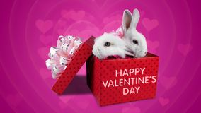 A happy couple of rabbits in love, Valentines Day greeting card. With text, pink background and floating little hearts stock video