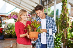 Happy couple shopping in nursery shop Stock Images